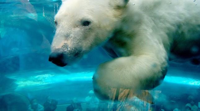 polarbears-environment-7180cf93.jpg.885x491_q90_box-0,160,3000,1825_crop_detail