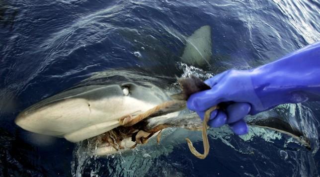 sharks-hawaii-309b509b.jpg.885x490_q90_box-0,57,3148,1800_crop_detail